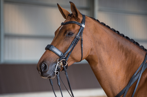 Fairfax Performance Bridles – Crewe Saddlery